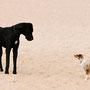 Was ist das denn für ein Riese (denkt Foxi), was ist das denn für ein Zwerg (denk der andere Hund)