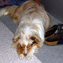 12.09.2012 - Foxi nach einem Spaziergang