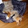 18.11.2011 - Das Einschränken kennt Foxi so gut wie gar nicht...