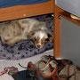26.01.2012 - Im Wohnwagen in ihrem Bett