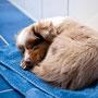 24.02.2011 - Foxi 10 Wochen