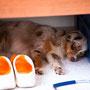 17.08.2011 - Im Wohnwagen unter'm Bett