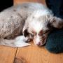 13.02.2011 - Foxi 8 Wochen