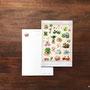 多肉植物図譜 ポストカード