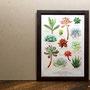 初個展記念「小さな多肉植物研究所」 A4ポスター