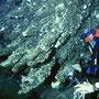 Le Trays Biogeniche della grotta Lu Lampiune (Otranto - LE). foto R. Onorato