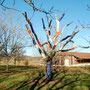 2010 L'arbre de Gaste, Meyrals