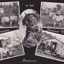 1965 SHETLAND PONY PARK SLAGHAREN Ansichtkaart 'Leve de vakantie in het Shetland Pony Park Slagharen'.