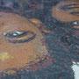 les deux portraits assemblés  (mosaïque portrait)