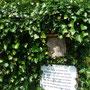Wildbienen und Grabwespenhotel