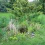 Der Teich mit dem Sedum, was gelb blüht.