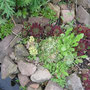 Der Steingarten macht was er will