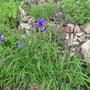 Gruß an Iris!