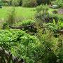 Und hier ein Blick auf die Umgebung von der Kräuterschnecke. Die Pimpinelle ist frech am wuchern.