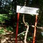 Im Wald sind Baumbesonderheiten eingerahmt. Regeneration der Architektur nach Beschädigung