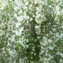 Hochzeitsbaum! Der prahlt wieder herum