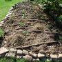 Das Hügelbeet aus dieser Richtung. Eine Kapuzinerkresse guckt gerade aus dem Boden. Der Steinrand ist noch neu.