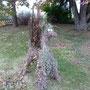 Das Eichhörnchentier soll echte Eichhörnchen herbeilocken