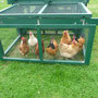 """Am Vormittag sind die Hühner im Traktor, in der Mittagszeit dürfen sie auf ihren """"Spielplatz"""" wechseln."""