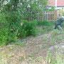 Der bepflanzte Dino auf dem Schotterweg und das Keyholebeet im Hintergrund.