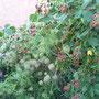 Die Rückseite vom Haus mit vielversprechenden künftigen Ernteerträgen