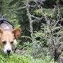 ein Gnom im Wald