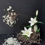 A. Ochmann: Samenstand Japananemone, weiße Lilie, Scheinzypresse