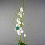 G. Jost: Ranunkelstrauchzweige, Eierschalen, Aspidistra-Blätter, Einblatt