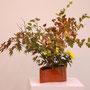 K. Tabuki: Ahorn, Viburnum opulus, Japanspiere,  Blattbegonien (begonia rex) Chrysanthemen