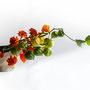 I. Truttmann: Lampionblumen (Physalis), Tagetes (Freier Stil, Herbst)