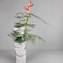 G. Jost: Plastikstreifen grau und grün, Helikonie, Zierspargel (Asparagus plumosus)