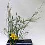 Dr. B. Speicher: Großblumiges Johanniskraut, diverse Gräser, Gerste (Foto: Dr. H. Mehlhorn) - Zaun aus Sicht einer Ameise