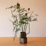 Schachtelhalm, Allium, Asparagus