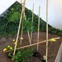 A. Denig, K. Tack: Bambus, Monstera-Blätter, Calla, Asparagus, Foto: A. Denig