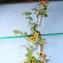 A. Denig: getrocknete Korkenzieherhasel, gemeiner Beifuß, kleine Sonnenblumen