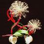 I. Offerhaus: Allium, Aspidistrablätter, Bananenstaude
