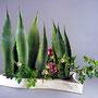 G. Jost: Agavenblätter, Rosen