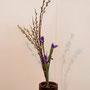 M. Sato: Weide, Iris
