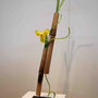R. Dollberg: Tulpe in getrocknetem Bambusrohr (Vergänglichkeit)