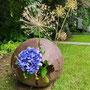 Dr. H. Lüder-Schirmer: Blauer Planet (Hortensie, Allium Samenstände)