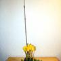 H. Eger: Tulpen, Hartriegel