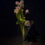 U. Winand: Tulpen - ... Tulpen aus Amsterdam (Foto: Prof. Dr. W. Möhler)