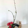 S. Kurose-Ellner: Tulpen, Kirschblüte