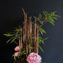 U. Winand: Schwarzer Bambus, Baum-Pfingstrose (Foto: Dr. W. Möhler)