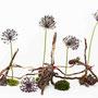 A. Fricke: Allium, Moos, Wurzelausläufer von gerodeten Weinstöcken, rotes Dekoband (Foto: O. Fricke)