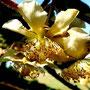 Kiwi: fleur mâle