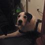 Snoopy, unser Ehrengast :)