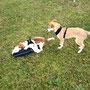 Nala, Marley und Mila beim sehr netten Spiel miteinander