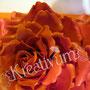 Rechteckige Hochzeitstorte mit riesen Rose und silbernen Perlen - Rosen Innenteil