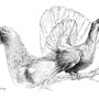 Le Grand Tétras - Image d'Epinal - 32,5 x 25 cm  <br><br>Dessin animalier . peintre animalier . artiste peintre . animal . dessin crayon . crayon noir . planche animalière . étude animalière